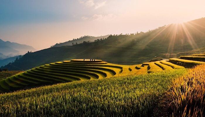 Asia - Risaie Vietnam