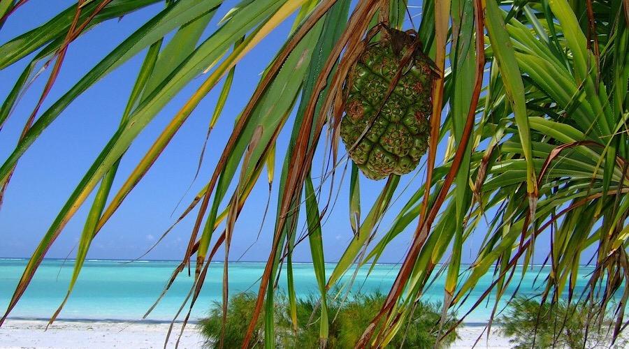 Zanzibar: 10 Incredibili Curiosità per Scoprirne l'Essenza